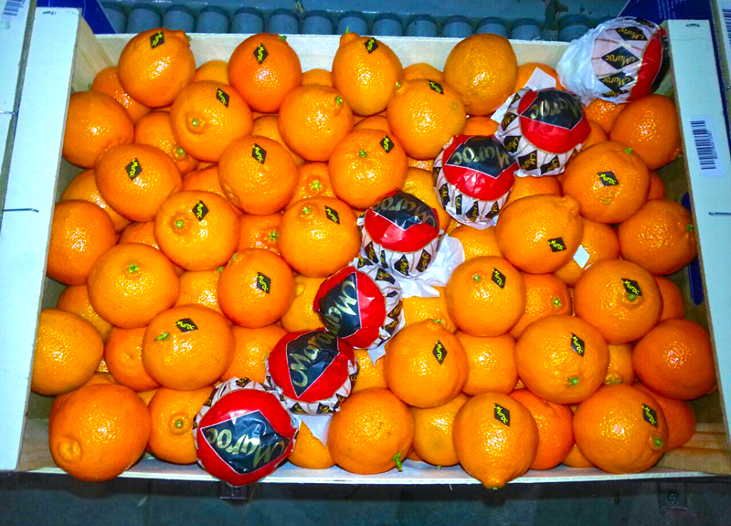 clementine-nour