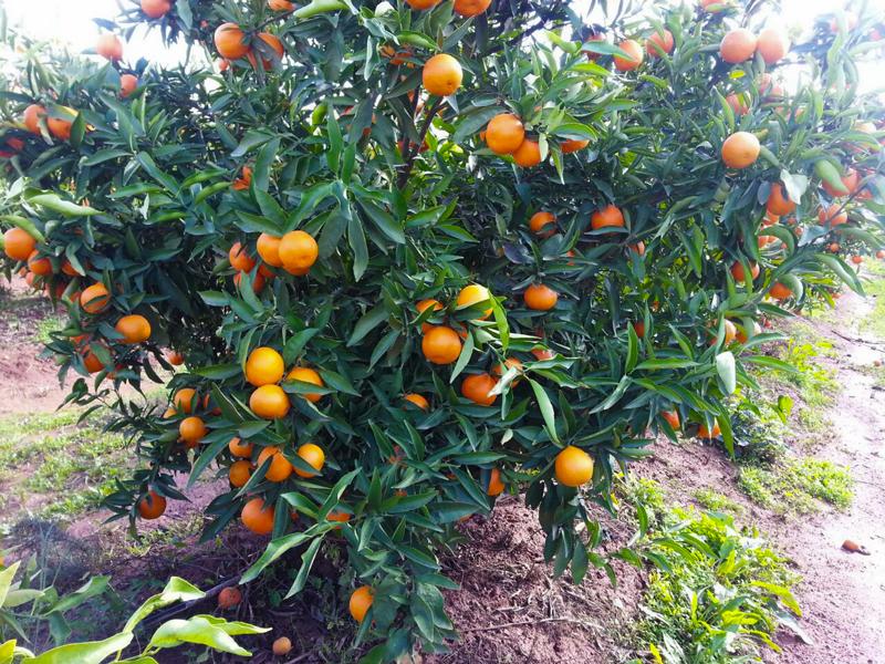 km-fruits-ferme