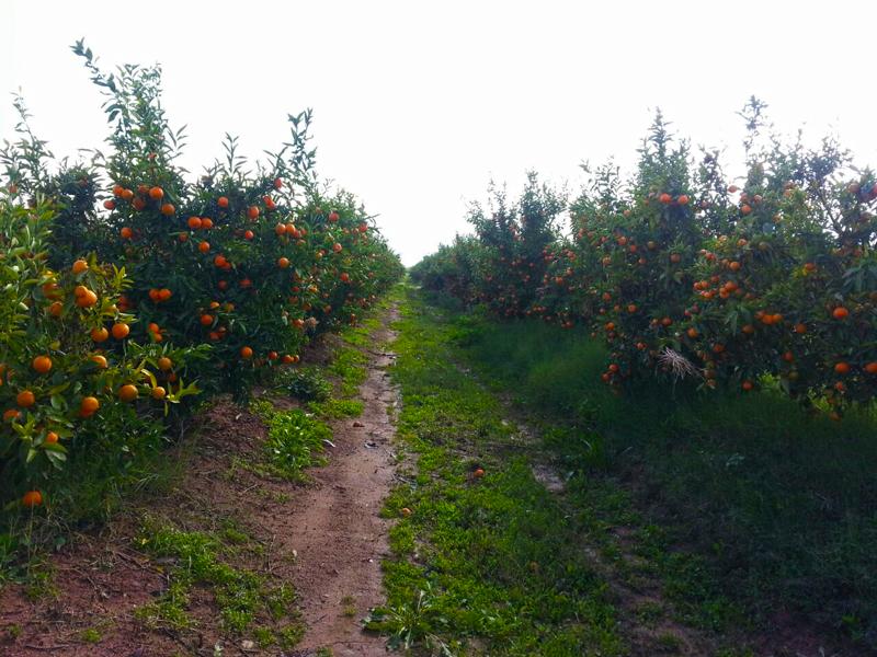 km-fruits-ferme2