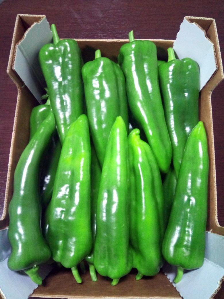 poivron vert (2)